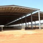 Судан: проект молочной фермы на 1200 коров