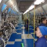 Казахстан: проект молочной фермы на 1100 голов